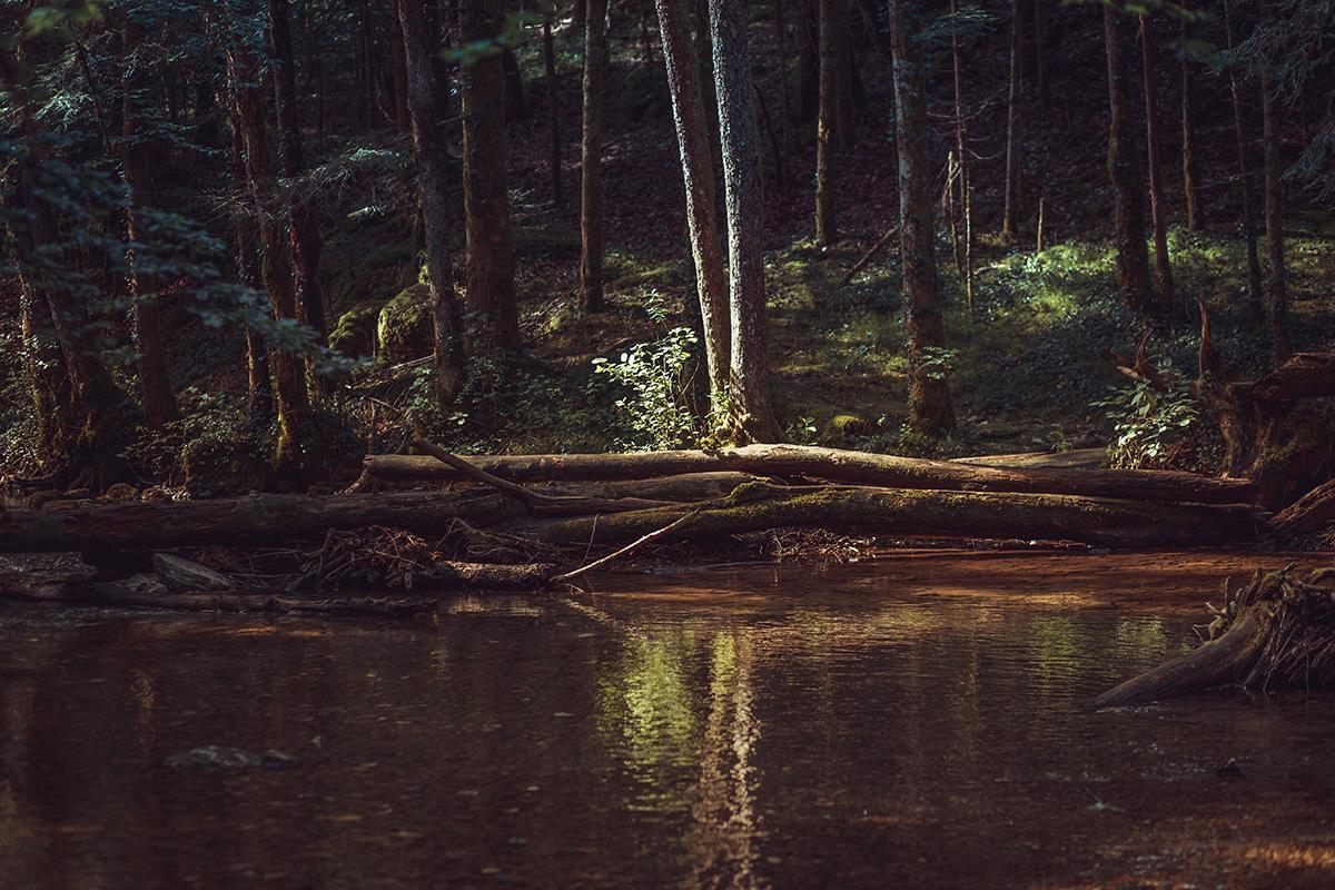 Jura Forest France