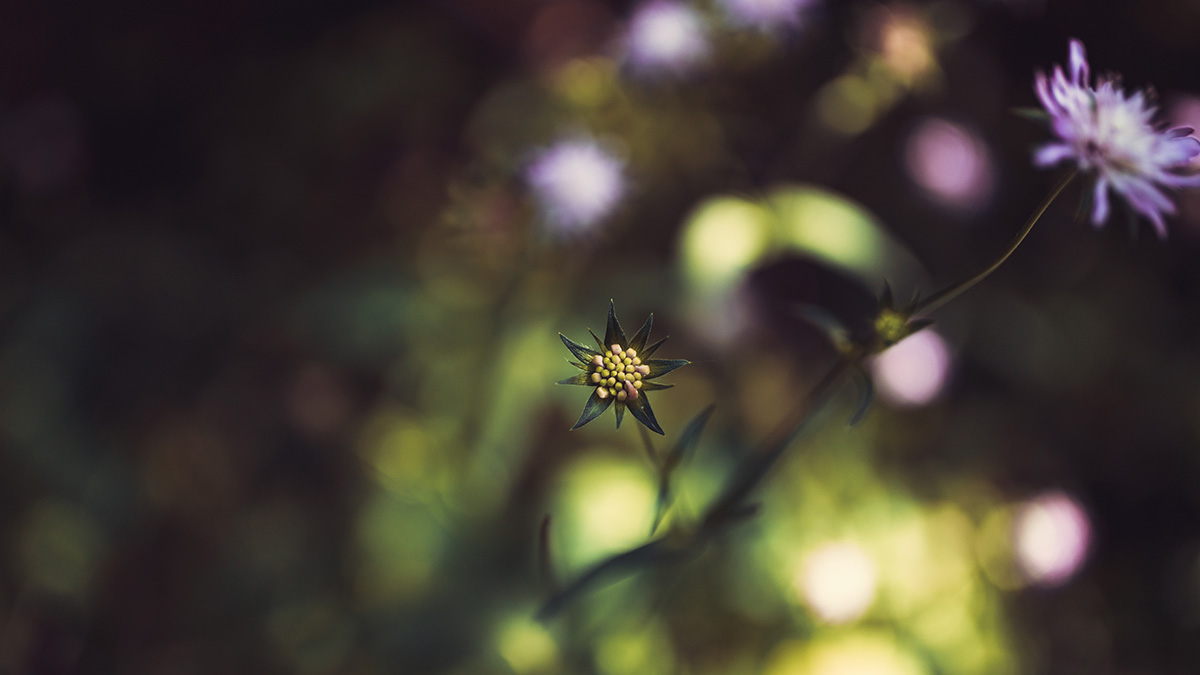 Flower Jura forest France
