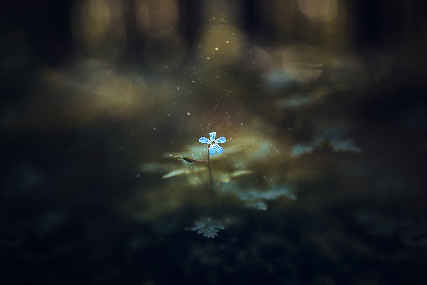 Blue daisy in a dark forest