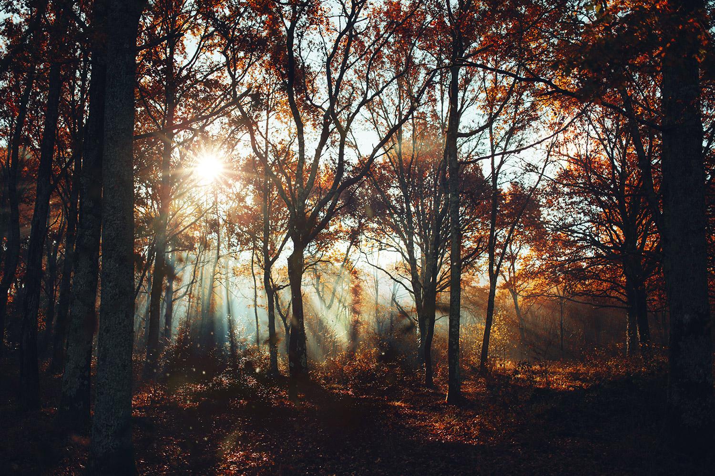 Raphaelle Monvoisin, Falling Sol, Autumn forest