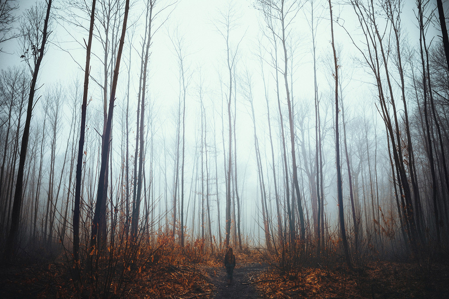 Raphaelle Monvoisin, Pathway to Winter, Autumn forest