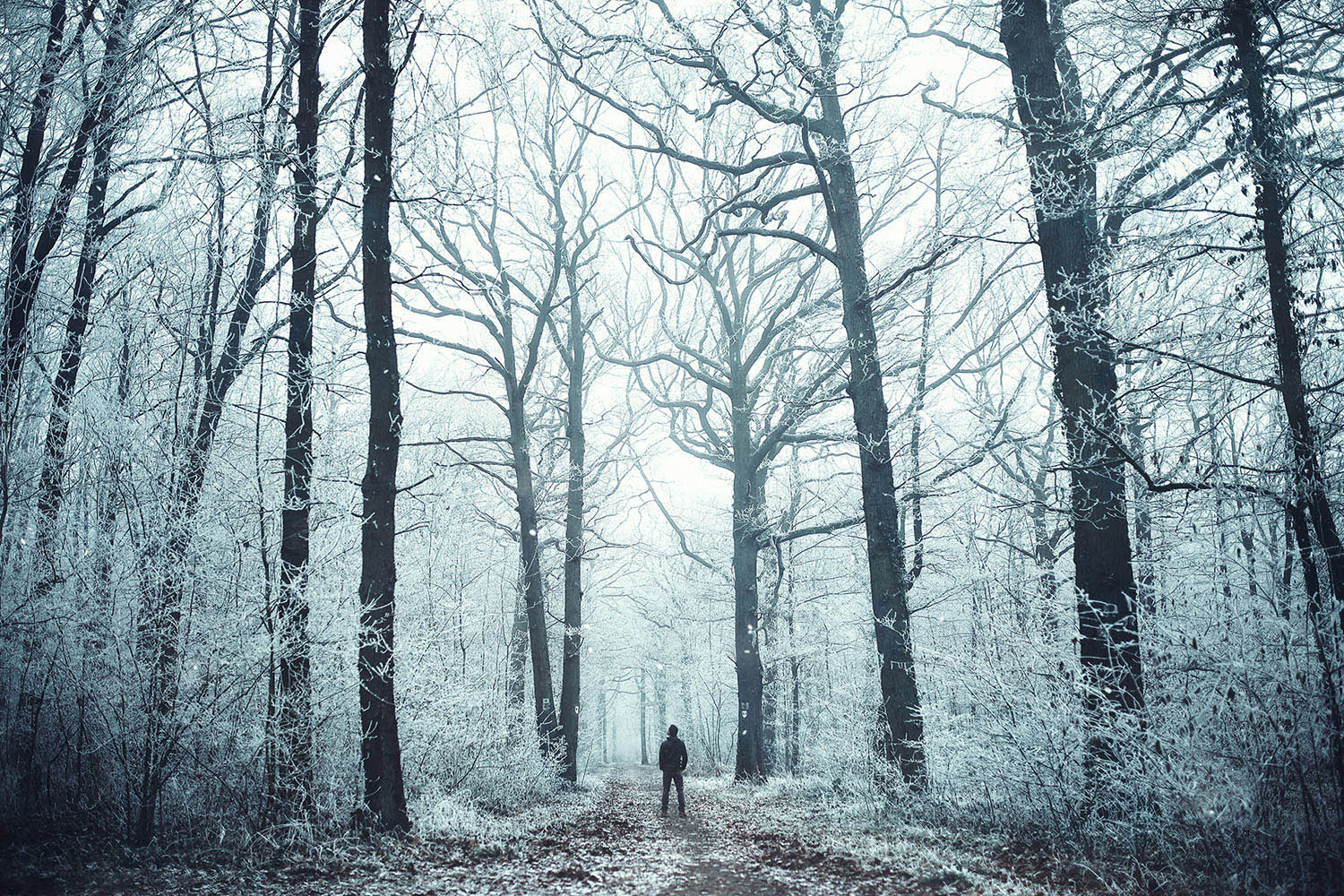 Raphaelle Monvoisin, The Crystal Path, winter forest