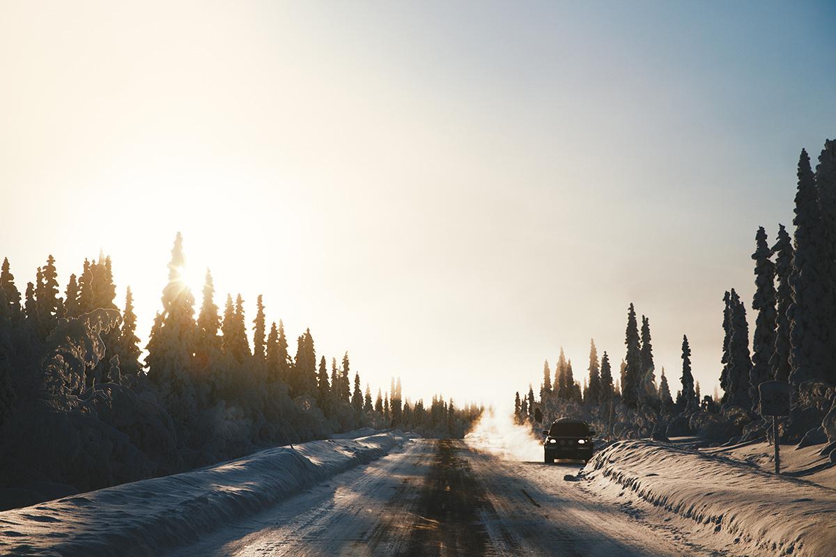 Lapland Candelabre boreal forest sunrise Raphaelle Monvoisin