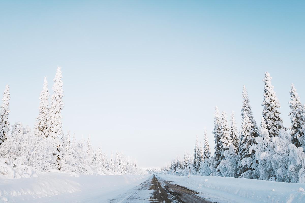 Lapland Candelabre boreal forest road Raphaelle Monvoisin