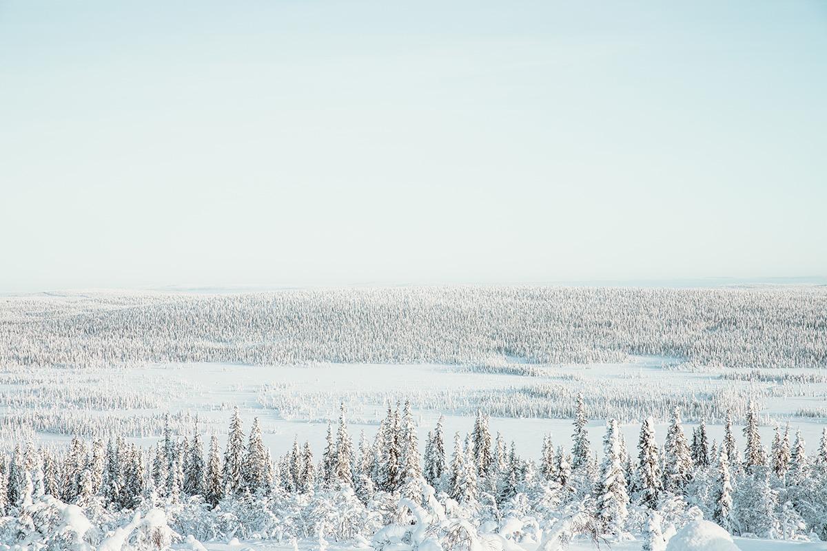 Lapland Candelabre boreal forest view Raphaelle Monvoisin