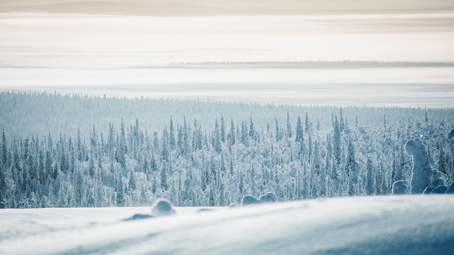 Lapland Candelabre boreal forest fog mist Raphaelle Monvoisin