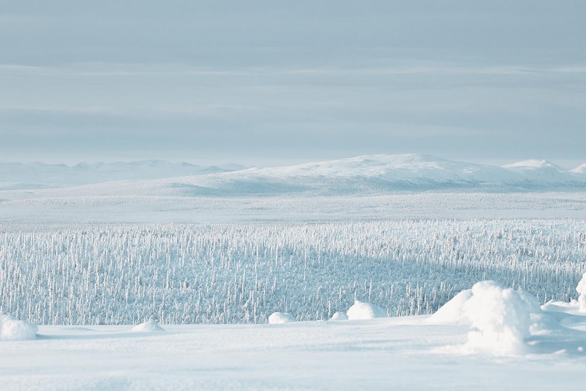 Lapland Candelabre boreal forest mountains Raphaelle Monvoisin