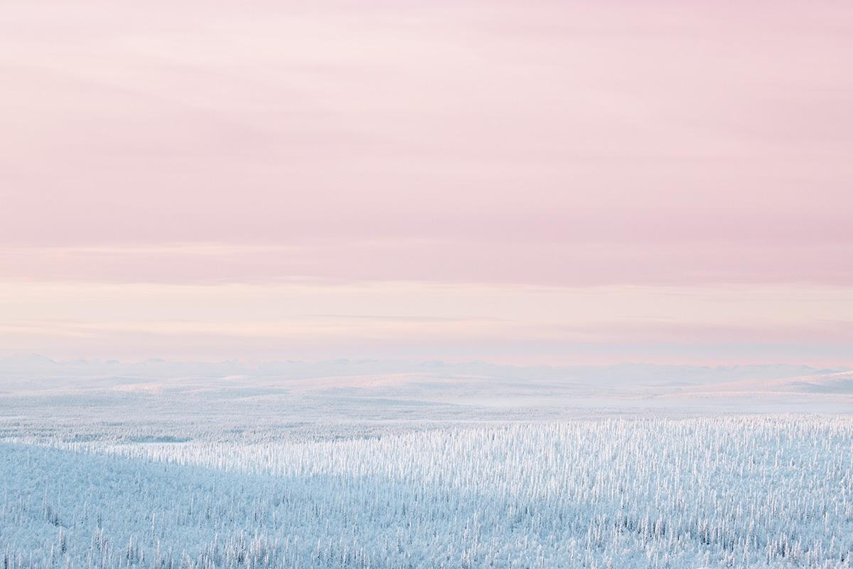 Pink Sunset Boreal forest Lapland Raphaelle Monvoisin