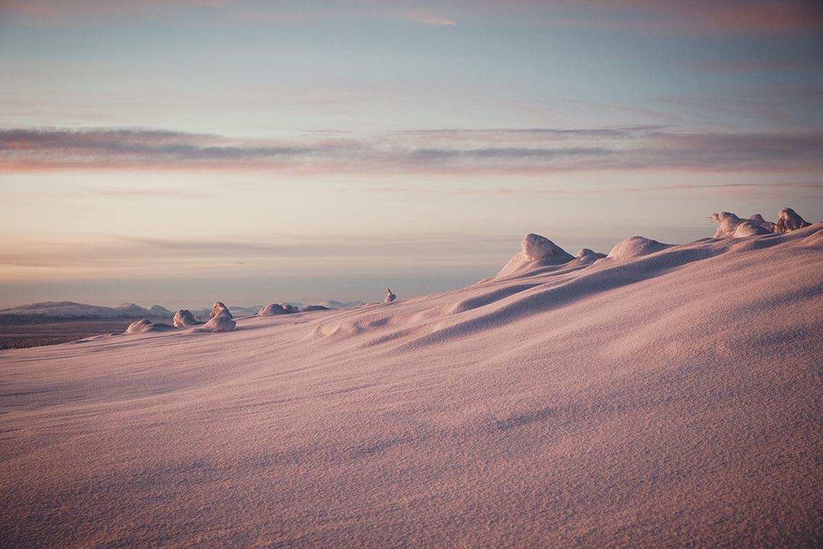 Pink snow Boreal forest Lapland Raphaelle Monvoisin