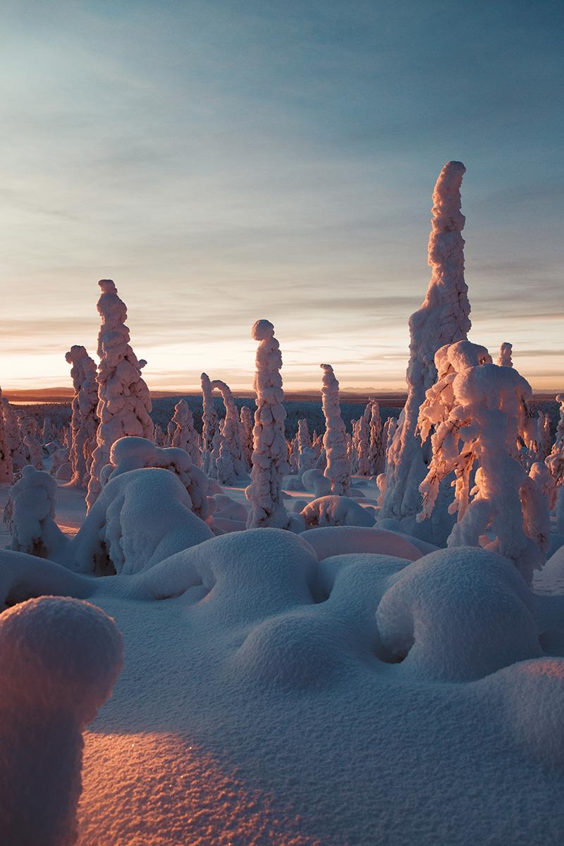 Lapland boreal arctic pinetrees sunset Raphaelle Monvoisin