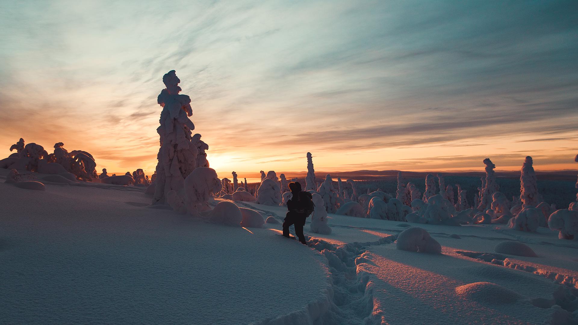 Sunset silhouette Boreal forest Lapland Raphaelle Monvoisin