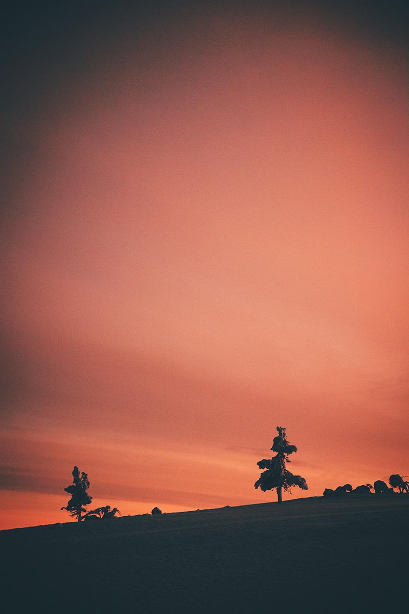 Lapland sunset sky trees Raphaelle Monvoisin
