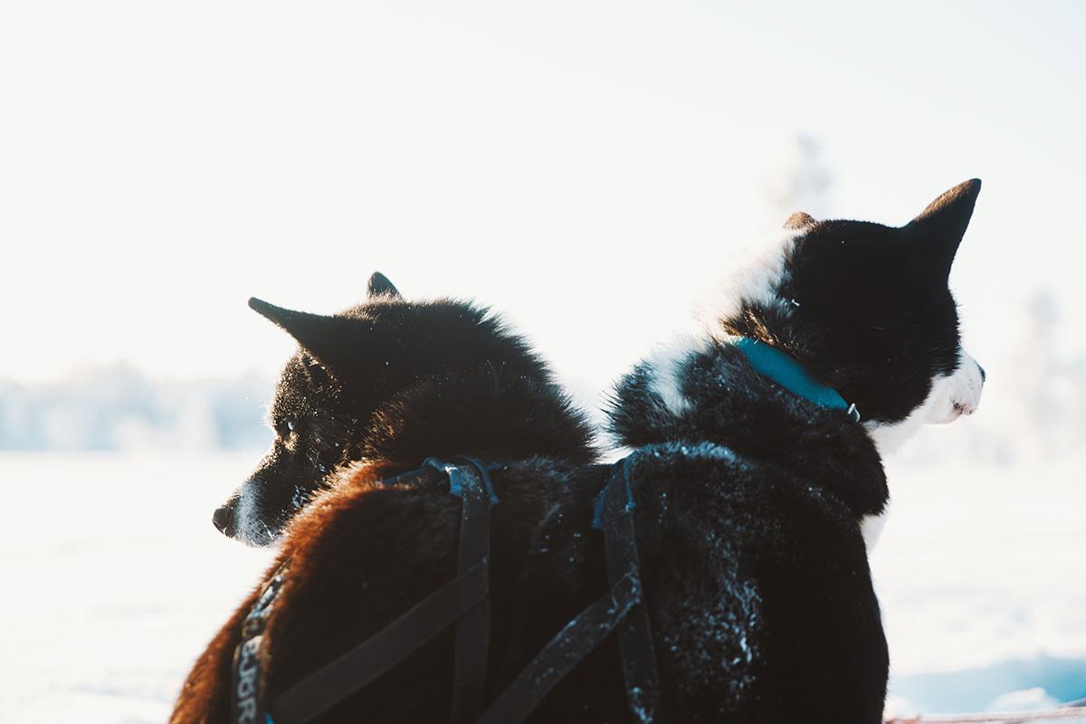 Hetta Huskies sleddog couple Raphaelle Monvoisin