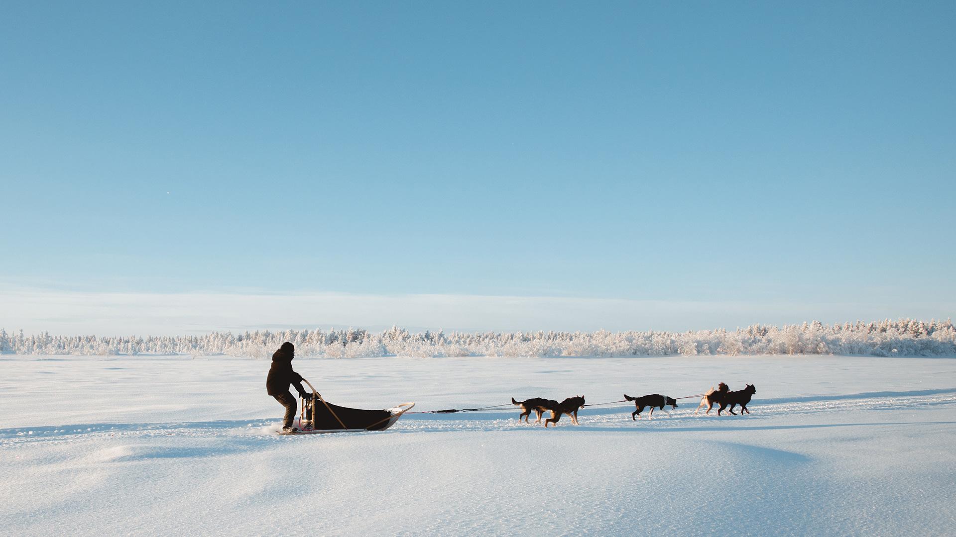 Hetta Huskies sleddog Raphaelle Monvoisin