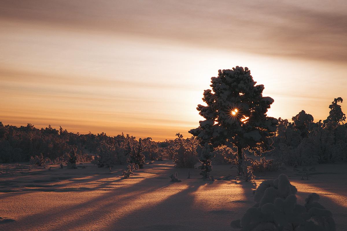 Lapland taiga sunrise Raphaelle Monvoisin