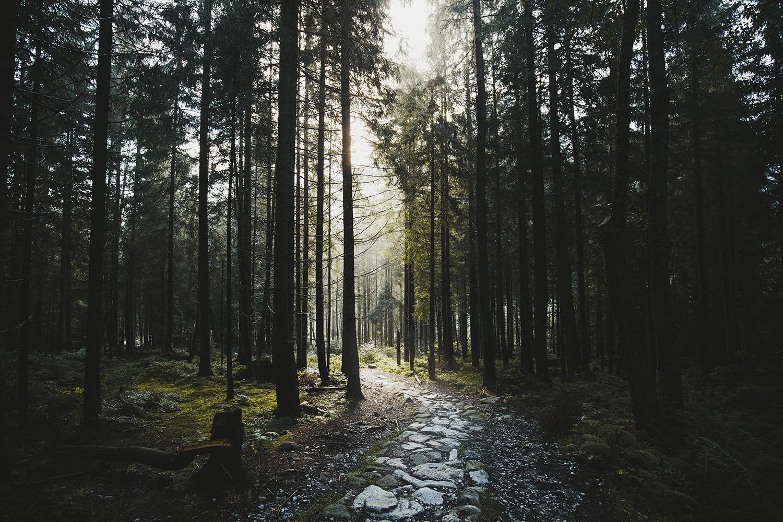 Raphaelle Monvoisin forest zakopane poland