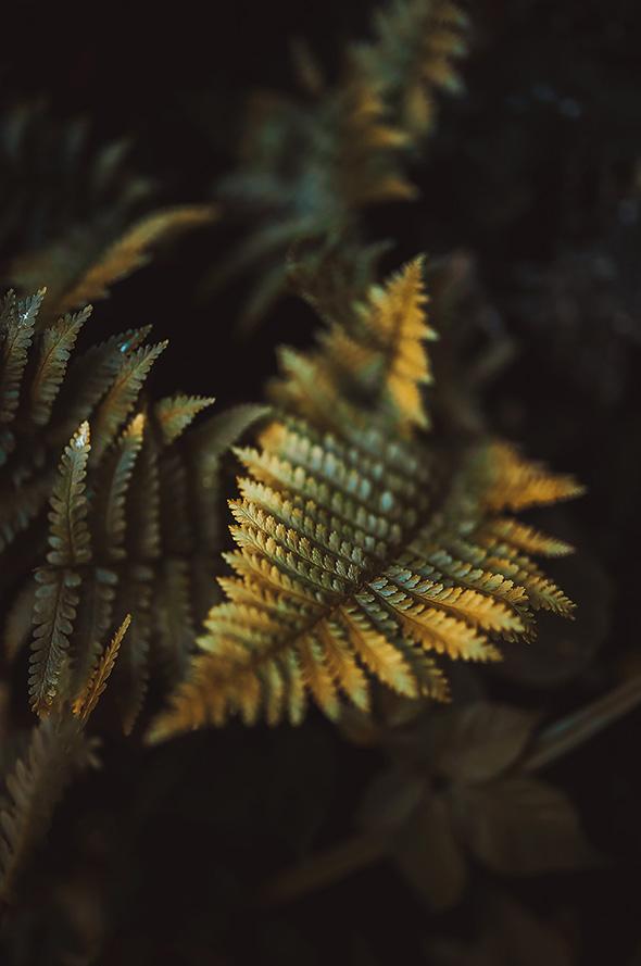 Raphaelle Monvoisin photography flower proxy macro botanical nature