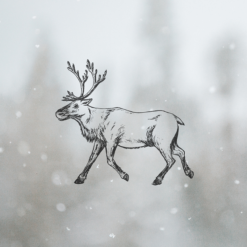 Raphaelle Monvoisin Illustration reindeer animal