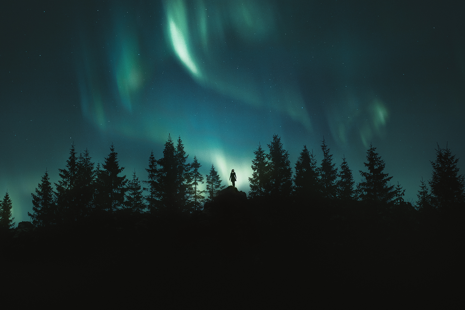 iceland forest north arctic boreal forest northern lights aurora