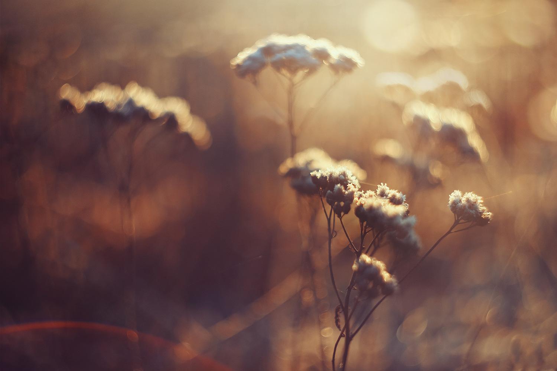 Raphaelle-Monvoisin-Iced-Bloom